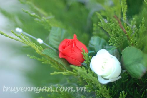 hoa-hồng-đỏ