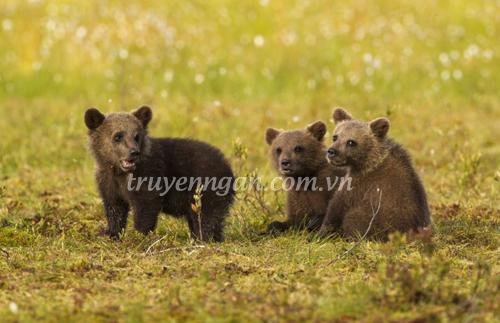 Bài học đầu tiên của gấu con