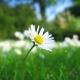 Hình đại diện của Hoa cúc trắng